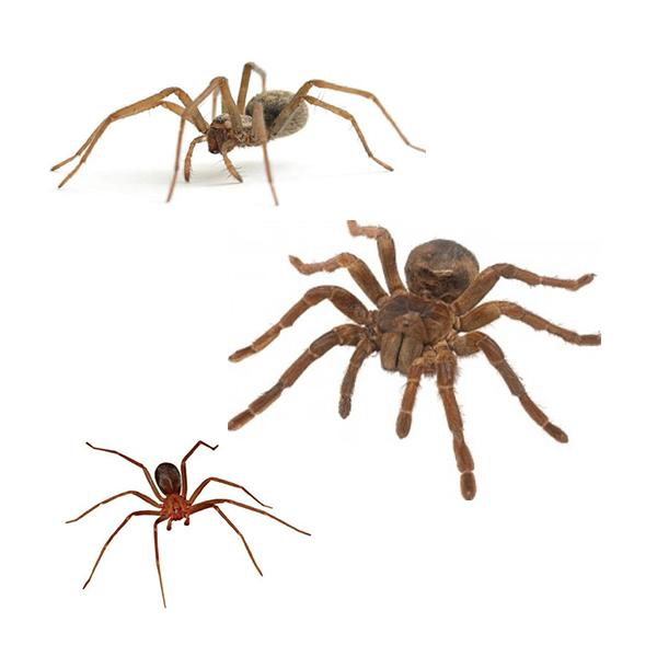master-prag-controle-de-pragas-servicos-controle-de-aranhas