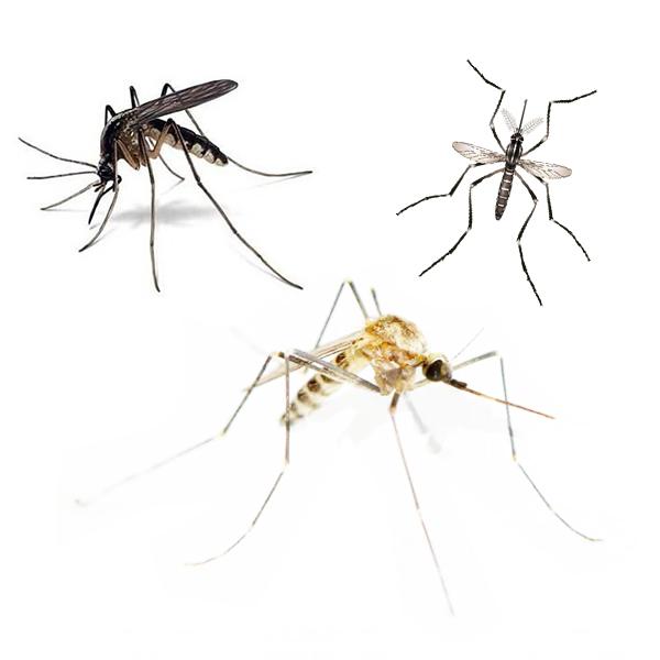 master-prag-controle-de-pragas-servicos-controle-de-mosquitos